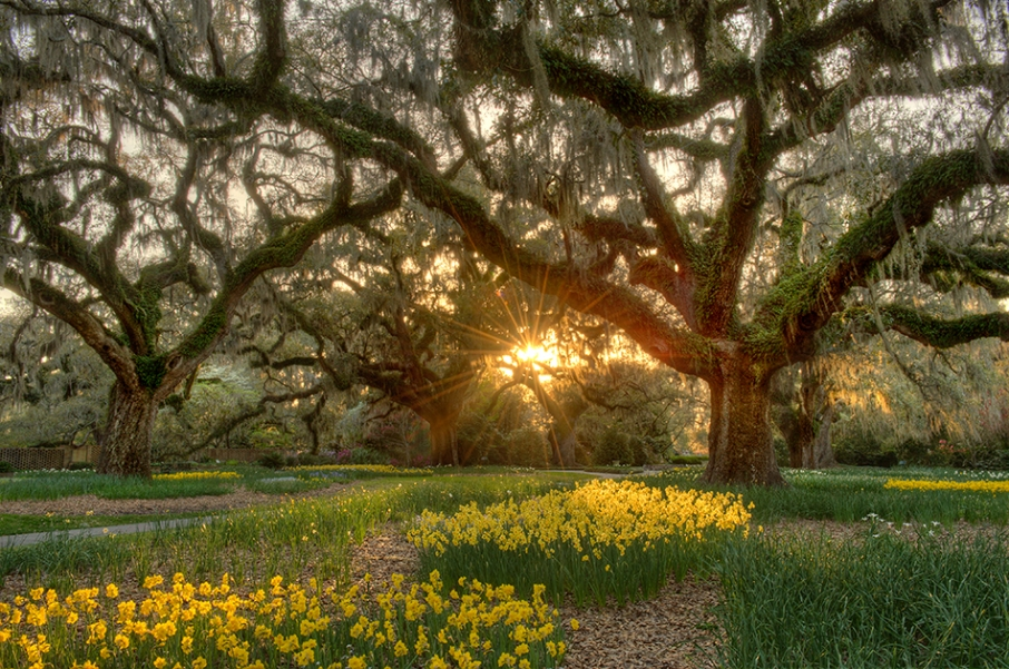 Brookgreen Gardens Sc Before The Coffee