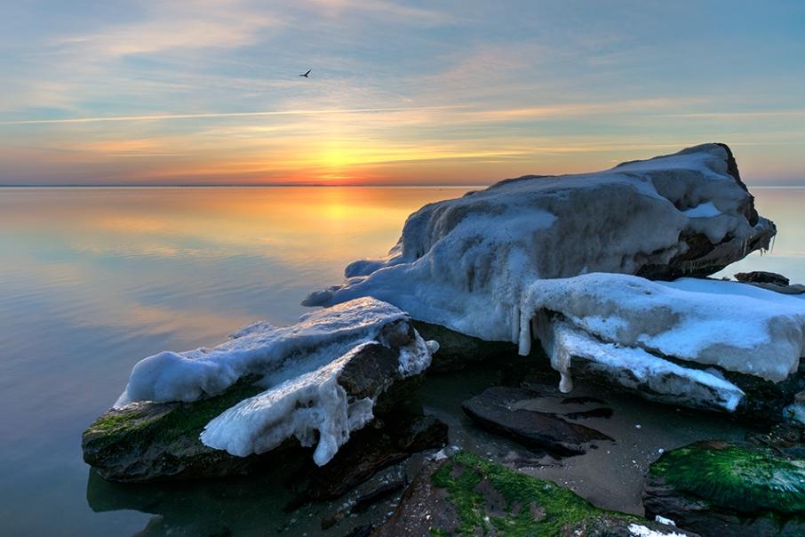 Chesapeake Bay Maryland Seagull Sunrise